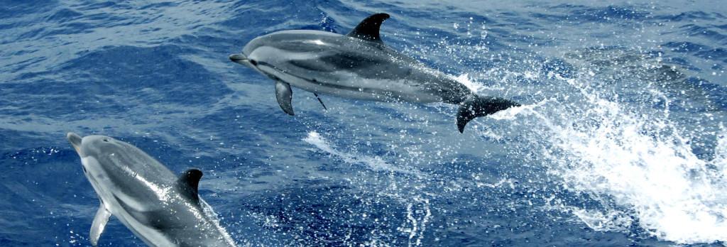 delfini volanti